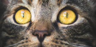 γατες μελλον