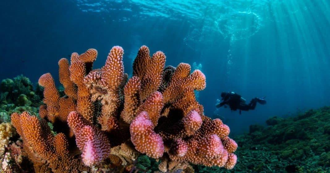 κοράλλια Αυστραλία