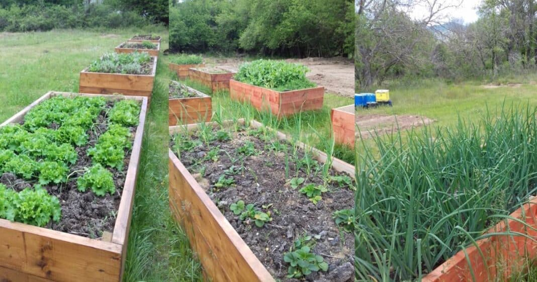 καλλιεργωντας λαχανικα