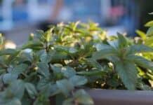 Ένας όμορφος κήπος με ιαματικά φυτά στο μπαλκόνι σας