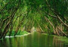 αποψίλωση_Αμαζονίου