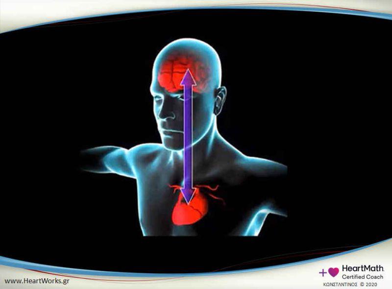 Εικόνα 1: επικοινωνία καρδιάς εγκεφάλου αποτελεί μέρος της έρευνας του Ινστιτούτου HeartMath (πηγή: the Shift Network / Greg Braden)