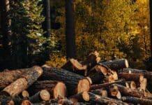 αποψίλωση-δασών