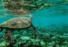 βήματα-σώσουμε-ωκεανούς