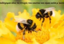 άγριες-μελισσες